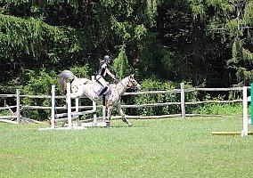 Appaloosa Horses for Sale - Free Ads - HorseWeb