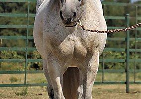 Horses for Sale in Texas TX - Free Ads - HorseWeb