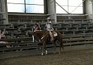 - Gelding in Bethany, CT