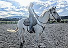 Casper - Gelding in West Yellowstone, MT