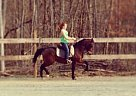 - Gelding in Thomasvillw, NC