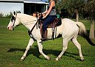 Paint Gelding for Sale in Mims, Florida