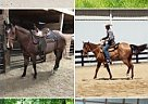 - Gelding in Sunbury, OH