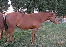 Quarter Horse Mare for Sale in Woodbine, Maryland