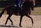 - Gelding in Cobourg, ON