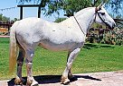 PEPPER - Mare in Tucson, AZ