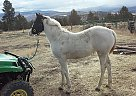 Frosty - Mare in Baker City, OR