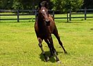 - Gelding in Jamestown, SC