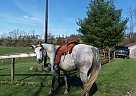 Deercrest Farm - Gelding in Saint Clairsville, OH