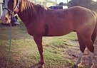 - Gelding in Weatherford, TX