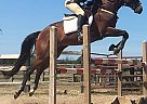Cool Gold - Mare in Pelham, ON