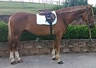 - Gelding in Middletown, PA