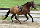 - Gelding in Raleigh, NC