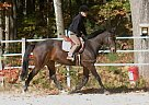 - Stallion in West Brookfield, MA