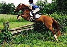 Brynn - Mare in MONKTON, MD
