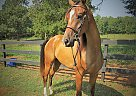 What the Huck BF - Gelding in Anderson, SC