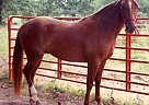 - Stallion in Siloam Springs, AR