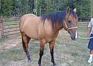- Stallion in Fitzgerald, GA