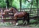 - Stallion in Lewisburg, TN