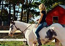 Paint Gelding for Sale in Baraboo, Wisconsin