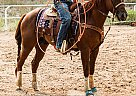 SLASH - Gelding in Fountain, CO