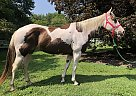 Tinker Bell - Mare in Lancaster, PA