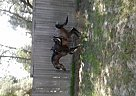 - Stallion in Keystone Heights, FL
