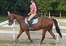 - Gelding in Haverhill, MA