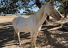 Angel - Mare in White City, OR