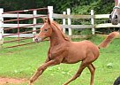 - Stallion in Dry Fork, VA