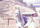 Thoroughbred Mare for Sale in Cashmere, Washington