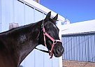 Thoroughbred Mare for Sale in Mission, Kansas