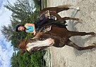 - Gelding in Lake Worth, FL
