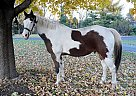 - Stallion in Saint Charles, IL