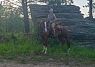 Vegas - Gelding in Fairfax, MN