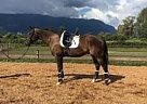 Thoroughbred Gelding for Sale in Maple Ridge, British Columbia