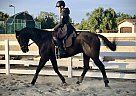 Enterprize Pays - Gelding in Costa Mesa, CA