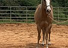 Bandit - Gelding in Greenville, GA