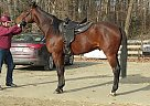 - Stallion in Millstone, NJ
