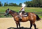 Quarter Horse Gelding for Sale in East Rochester, Ohio