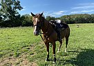 Dolly - Mare in Sprinng Hill, TN