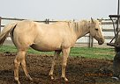 DB Miss Blondie - Mare in Fullerton, ND