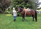 - Gelding in Big Spring, KY