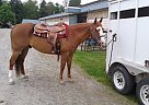 - Gelding in Mission, BC