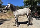 Jordan - Stallion in Aptos, CA