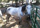 - Stallion in Salem, AL