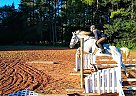 Shiloh - Gelding in Advance, NC