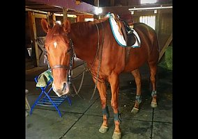 Jumping Horses for Sale in Connecticut CT - FREE Ads - HorseWeb