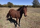 Annie - Mare in Weatherford, TX