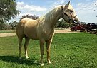 - Gelding in Columbia, SD